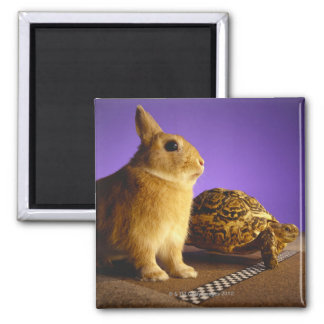 Tortoise and the hare square magnet