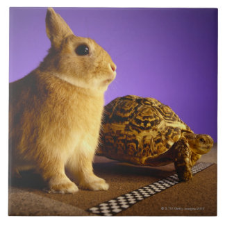 Tortoise and the hare tile
