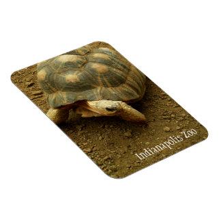 Tortoise at Indianapolis Zoo Rectangular Photo Magnet