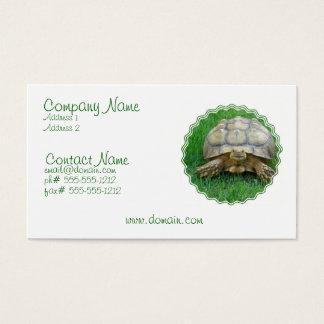 Tortoise Business Card