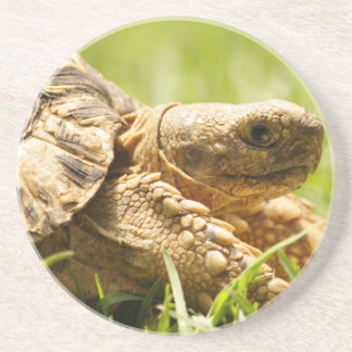 Tortoise Coaster