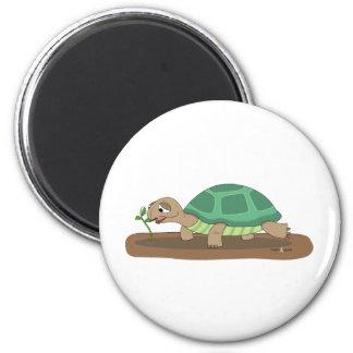 Tortoise eating fridge magnets