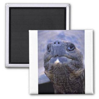 Tortoise face magnets