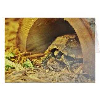 Tortoise hiding in shell 2 card