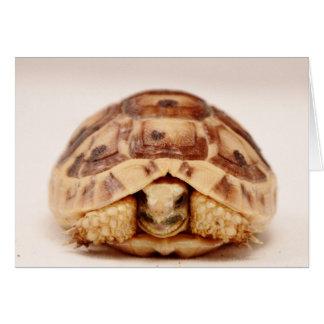 Tortoise hiding in shell card