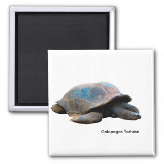 Tortoise image for Square-Magnet Magnet