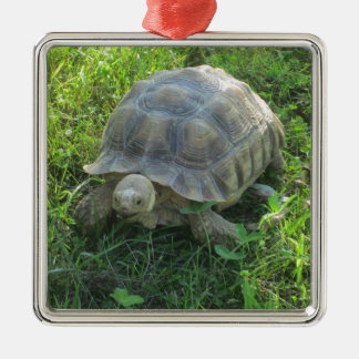 Tortoise in Grass Christmas Ornament