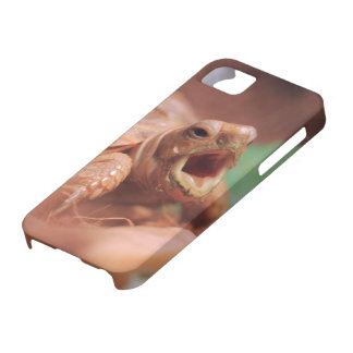 Tortoise iPhone 5 Covers