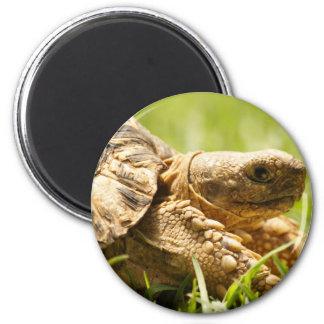 Tortoise Magnet Magnets