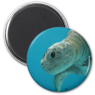 tortoise magnet