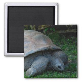 Tortoise Square Magnet