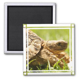 Tortoise Magnet Refrigerator Magnets