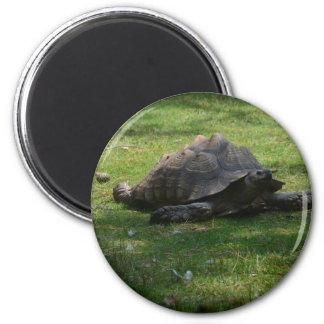 tortoise fridge magnets