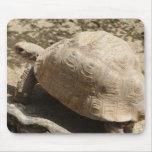 Tortoise Mousemat
