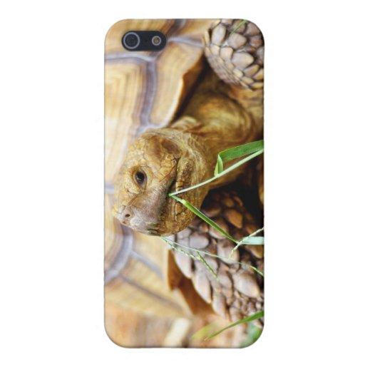 Tortoise Munching Grass iPhone 5 Cover