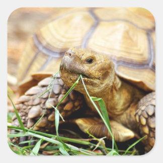 Tortoise Munching Grass Stickers