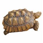 Tortoise - Ornament Photo Cutouts