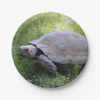 Tortoise Paper Plate