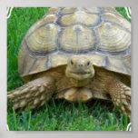 Tortoise Poster Print