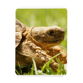 Tortoise Premium Magnet