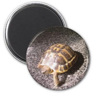 Tortoise Refrigerator Magnets