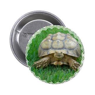 Tortoise Round Button