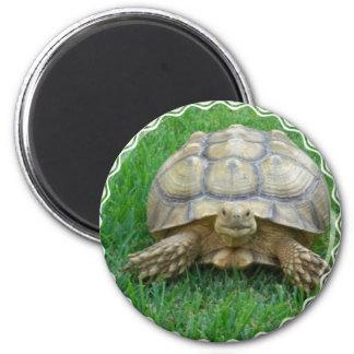 Tortoise Round Magnet Magnet