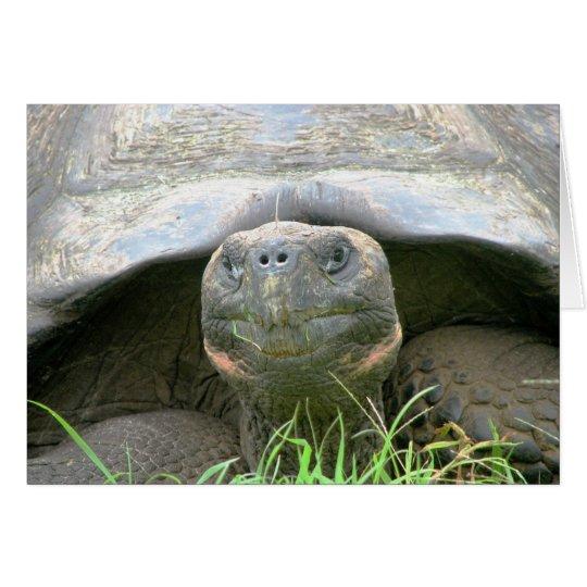 Tortoise, Santa Cruz Island, Galapagos Card