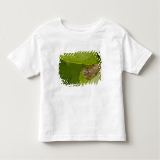 Tortoise shell beetle, cloud forest, Costa Rica Toddler T-Shirt