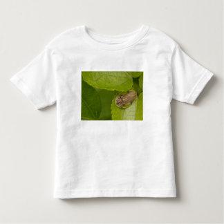 Tortoise shell beetle, cloud forest, Costa Rica Toddler T-Shirt