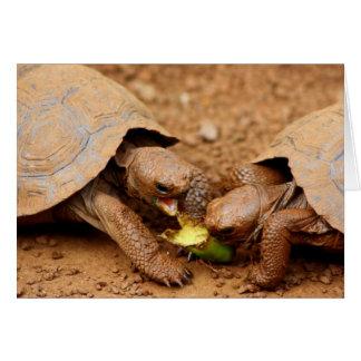Tortoise Snack Card