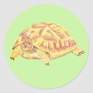 Tortoise sticker, turtle sticker