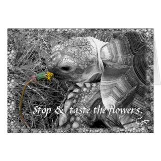Tortoise - Stop & taste the flowers Greeting Card