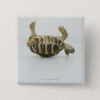 Tortoise upside down, balancing on shell 15 cm square badge