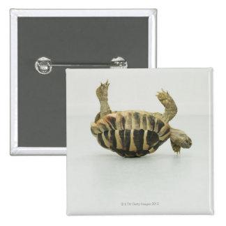 Tortoise upside down, balancing on shell 15 cm square badge