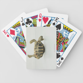Tortoise upside down, balancing on shell bicycle playing cards