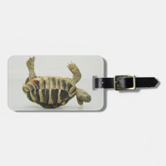 Tortoise upside down, balancing on shell luggage tag