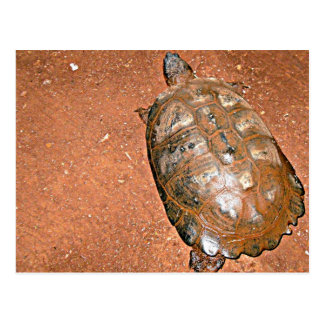 Tortoise walking on brown soil postcard