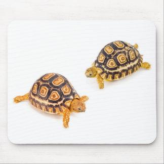 Tortoises Meeting Mouse Mat