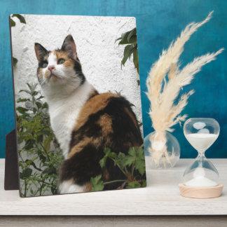 Tortoiseshell and White Cat Plaque