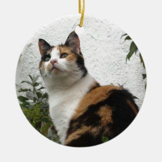 Tortoiseshell and White Cat Round Ceramic Decoration