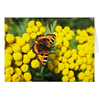 Tortoiseshell butterfly on tansy  flowers card