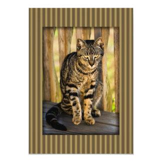 Tortoiseshell Cat Portrait, Closeup Animal Photo 13 Cm X 18 Cm Invitation Card