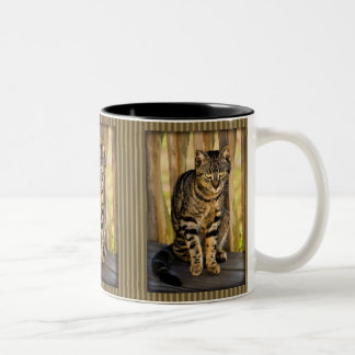 Tortoiseshell Cat Portrait, Closeup Animal Photo Two-Tone Mug
