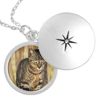 Tortoiseshell Cat Portrait Pet Photography Silver Plated Necklace