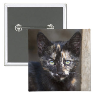 Tortoiseshell Kitten 15 Cm Square Badge