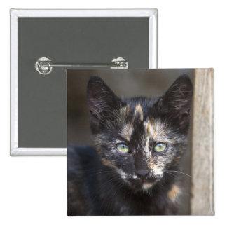 Tortoiseshell Kitten 15 Cm Square Badge