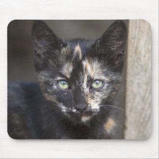 Tortoiseshell Kitten Mouse Pad