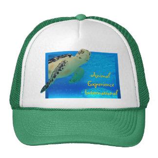 Tortuga Hat