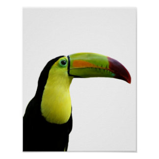 Toucan animal exotic tropical modern photo poster